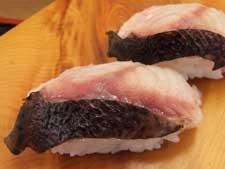 狼魚/オオカミウオ