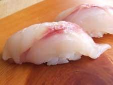 小判鮫/コバンザメ